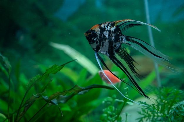Veelkleurige vis in een aquarium