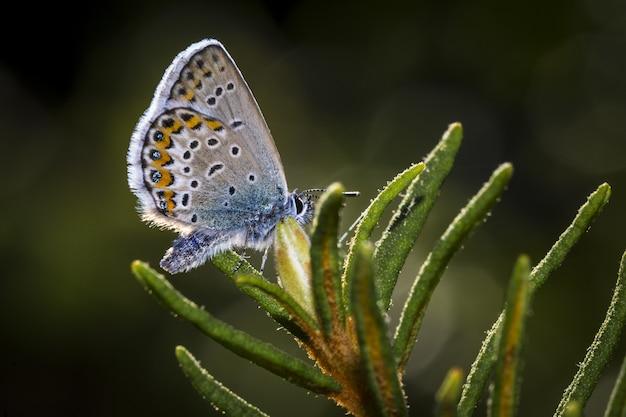 Veelkleurige vlinder close-up