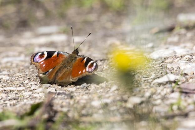 Veelkleurige vlinder close-up Gratis Foto