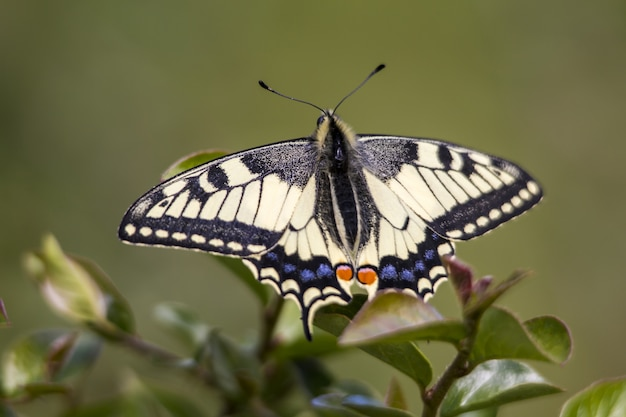 Veelkleurige vlinder op blad