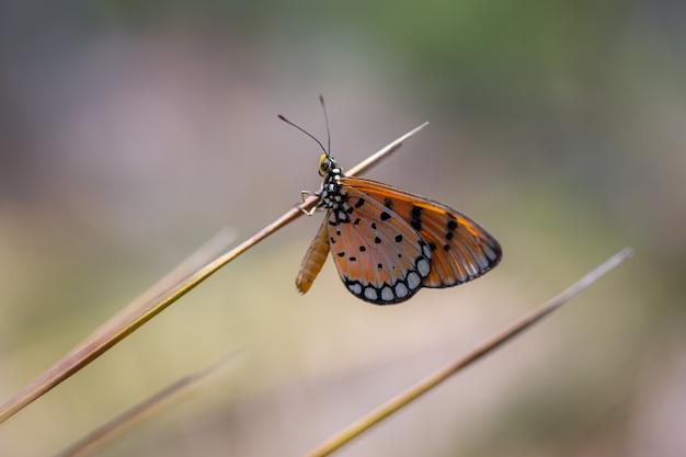 Veelkleurige vlinder op bruine steel
