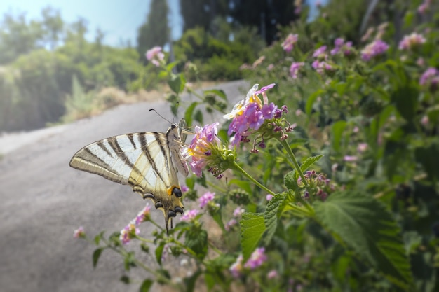 Veelkleurige vlinder zittend op bloem