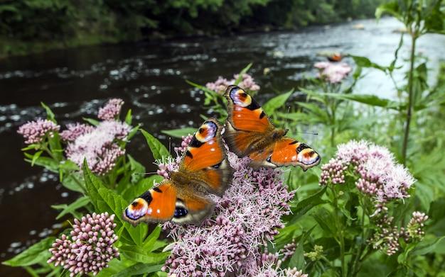 Veelkleurige vlinders close-up Gratis Foto