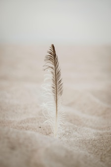 Veer op het zand