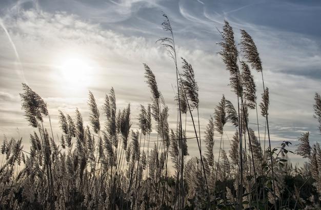 Vegetatie in het veld bij zonsondergang