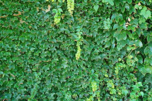 Vegetatie laat het leven plantkunde flora groeien