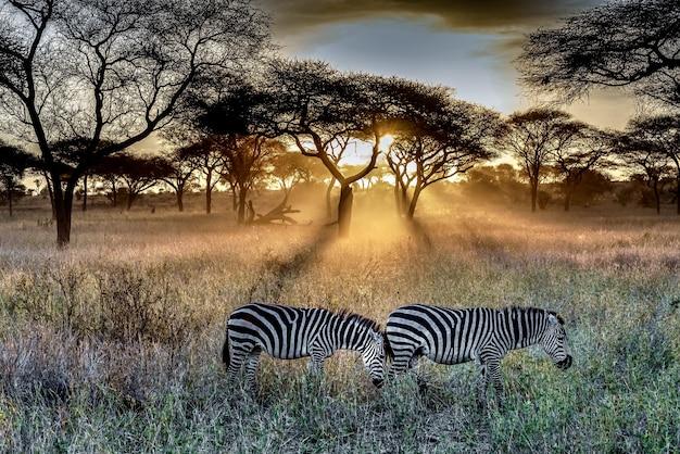 Veld bedekt met gras en bomen, omringd door zebra's in het zonlicht tijdens de zonsondergang
