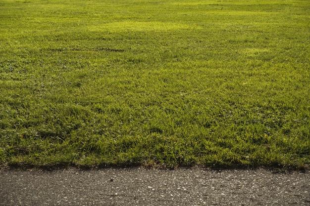 Veld bedekt met groen in de buurt van een weg onder zonlicht