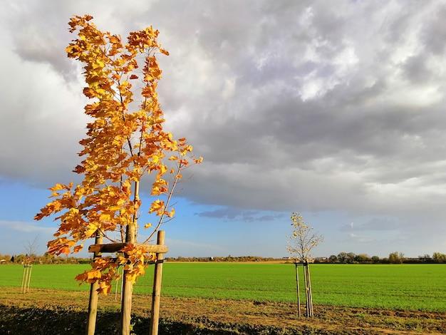 Veld bedekt met groen onder een bewolkte hemel tijdens de herfst in stargard in polen