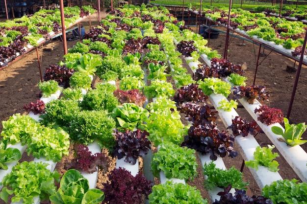 Veld geplant biologische plantaardige boerderij.