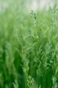 Veld groen gras landschap-achtergrond