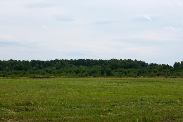 Veld in augustus, met een bos en een blauwe lucht op de achtergrond