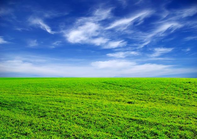 Veld met de blauwe lucht