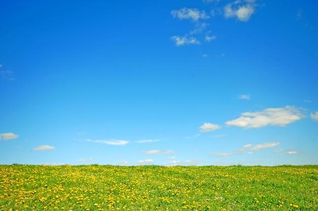 Veld met gele bloemen en de blauwe hemel
