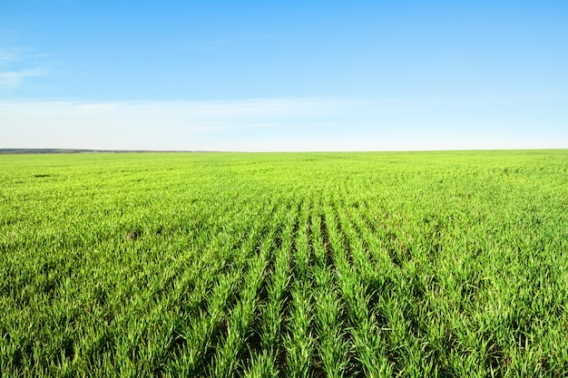 Veld met groen gras en blauwe hemel