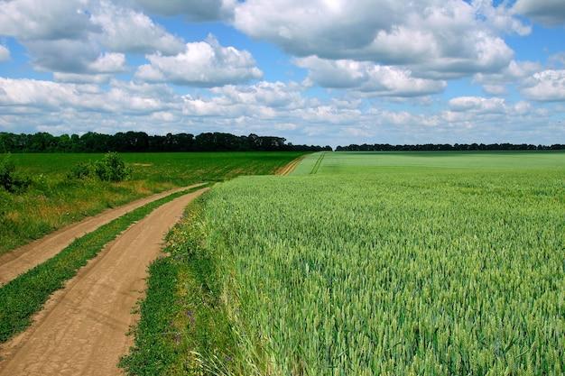 Veld met groene tarwe en wolken buiten en over de weg