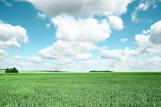 Veld met groene tarwe en wolken buiten
