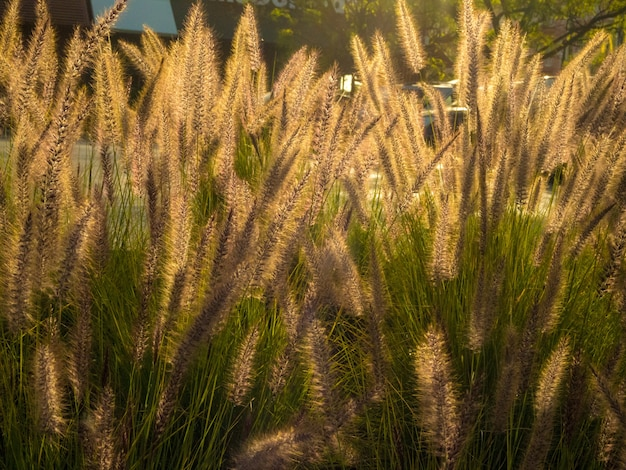 Veld met zoet gras overdag - geweldig voor een mooi behang