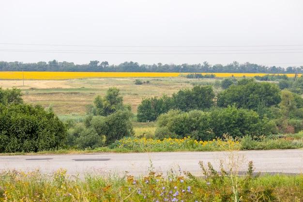 Veld met zonnebloemen en tarwe. zomer veld