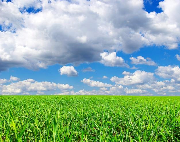 Veld op een achtergrond van de blauwe lucht
