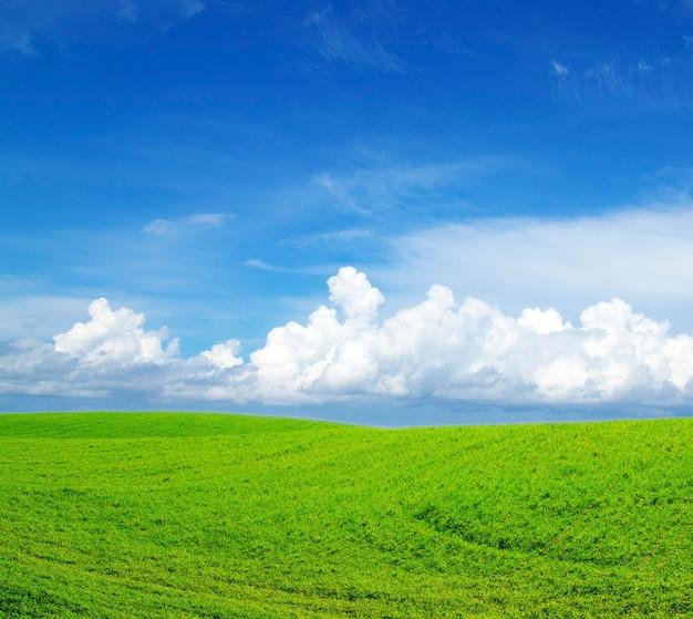 Veld op een oppervlak van de blauwe lucht