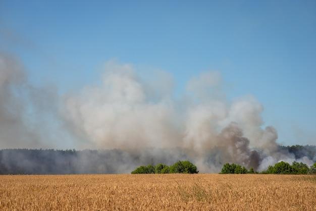 Veld van tarwe en bosbrand met veel rook op de achtergrond. concept van wild vuur