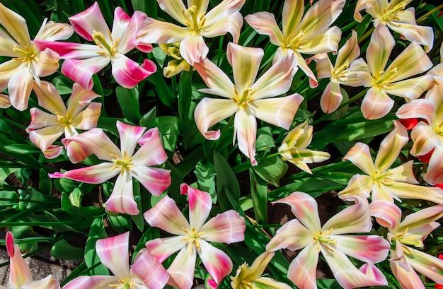 Veld van wilde bloemen. lente landschap. holland