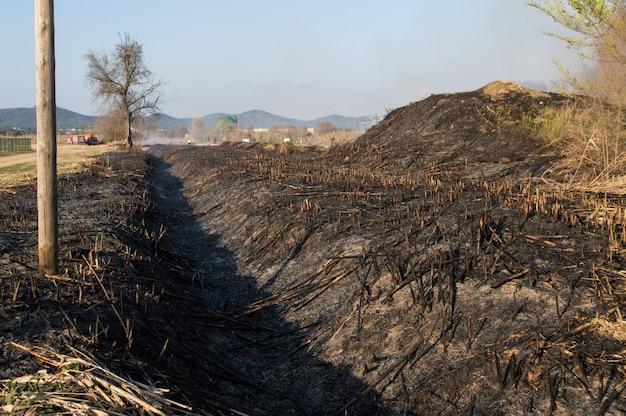 Veld verbrand door een toezicht, palafolls