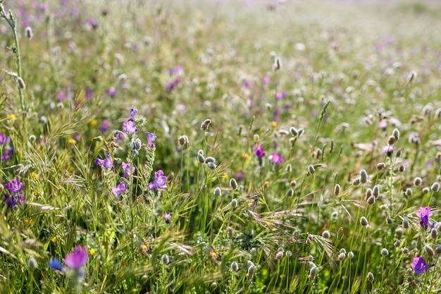 Veld vol wilde bloemen in het voorjaar. achtergrond van wilde bloemen