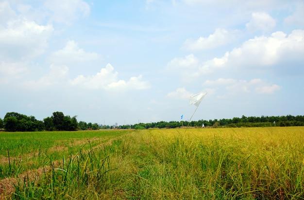 Velden van goudgeel en de middaghemel met mooie witte wolken in de zomer