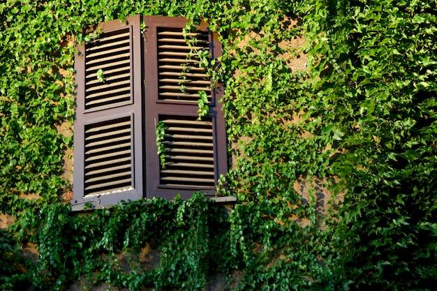 Venster en muur bedekt met groene klimop