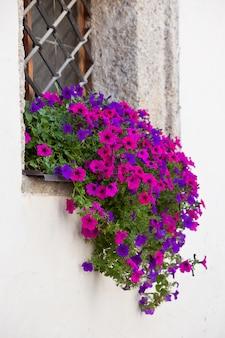 Venster met kleurrijke bloemen op een witte muur