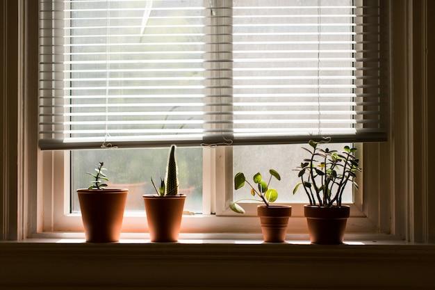 Vensterbank met kamerplanten in bruine potten in een kamer