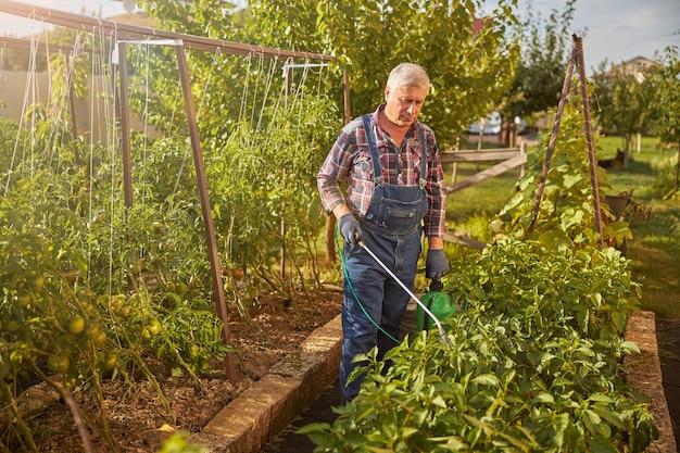 Verantwoordelijke bejaarde man die voor zijn tuin zorgt terwijl hij planten besproeit om ze tegen insecten te beschermen