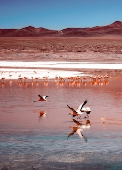 Verbazingwekkend laguna colorada-landschap met een zwerm prachtige flamingo's