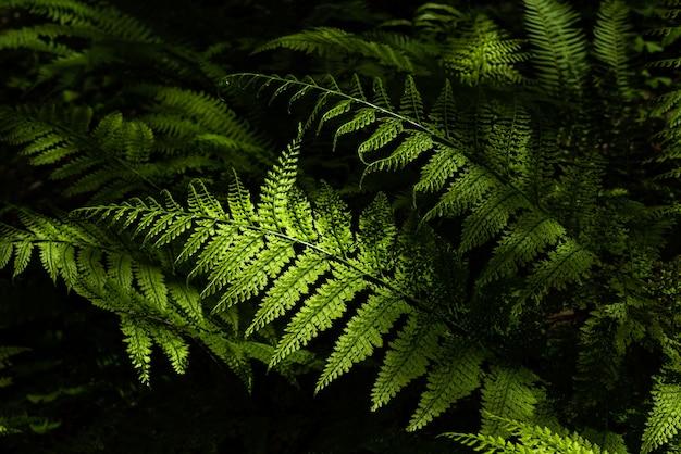 Verbazingwekkende groene varenbladeren in de natuur verlicht door een zacht zonlicht.