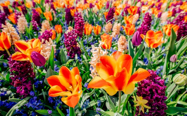 Verbazingwekkende kleurrijke bloem en groen gras