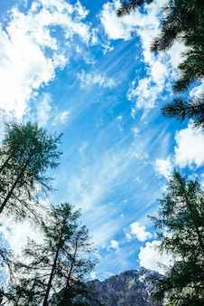 Verbazingwekkende levendige hemel met zachte wolken boven besneeuwde bergketen achter hoge naaldbomen