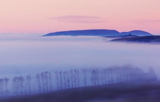 Verbazingwekkende mistige landelijke landschappen in de ochtend. nieuw-zeeland prachtige natuur