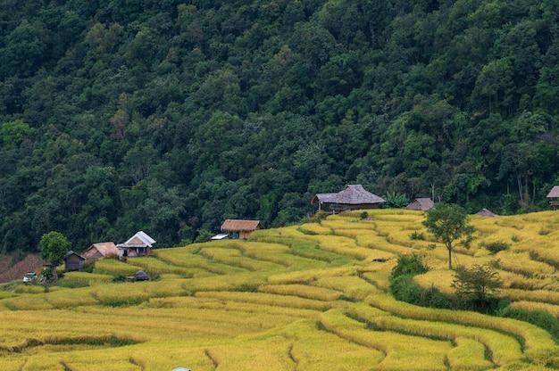Verbod pa bong piang terrasvormige padievelden met mist in chiang mai, thailand
