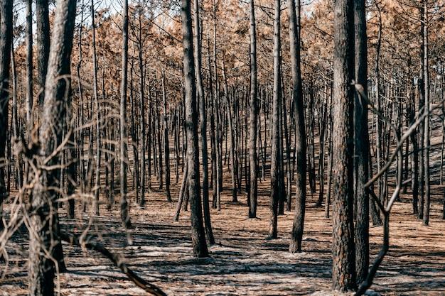 Verbrand apocalyps bos met bleke as op de grond