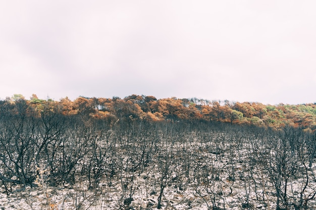 Verbrande bomen en struiken na de brand