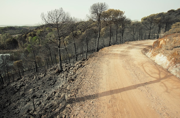 Verbrande dennenbos en onverharde weg