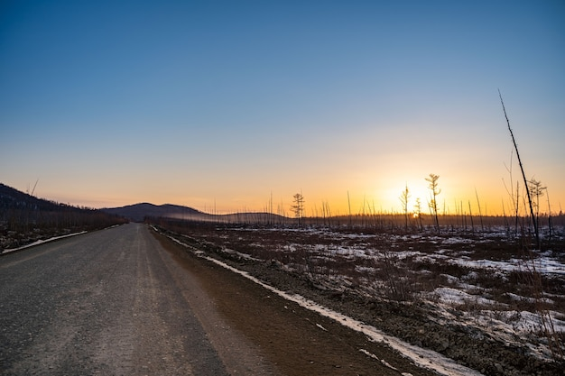 Verbrande pijnboomstammen na een bosbrand zonnige zonsondergangavond in het verbrande bos
