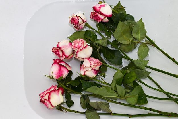 Verdorde rozen liggen in bad met water. bloemenverzorging snijrozen worden in schoon, koud water geplaatst om ze vers te houden. roze rozen ondergedompeld in water