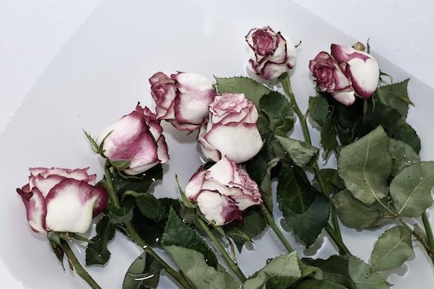 Verdorde rozen liggen in een bad met water. bloem zorg. snijrozen worden in water geplaatst om ze vers te houden.