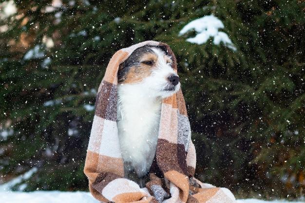 Verdrietige hond halfbloed, op straat in een deken in de sneeuw.
