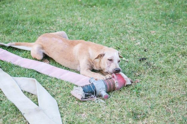 Verdwaalde de stoffenbuis van de hondbeet op grasvloer in het openbare park
