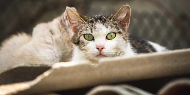 Verdwaalde en sared moeder moeder kat met kittens op de achtergrond, vriendelijke groene ogen van de dakloze kat