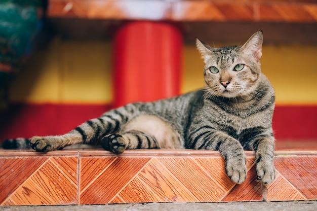 Verdwaalde grijze kat die op straat let